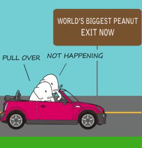 elephant_car