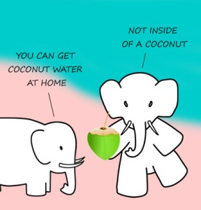 elephant_coconut